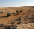 Djebel Bal'as, Syrie (© F. Abbès - Archéorient)